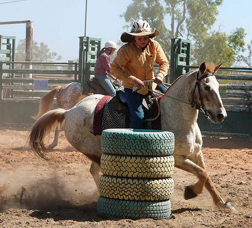 barrel-racing-1010087_1920